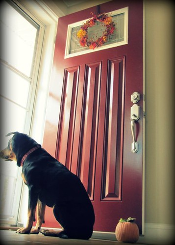 Fall Decor, Red Door & Dog