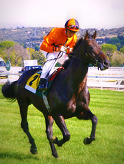 Beauty (Little Sadie) Tags: madrid horse race caballo carrera hipdromodelazarzuela