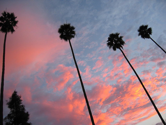 Sunset over the palm trees.