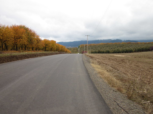 Strohmayer Road, plum orchards in fall