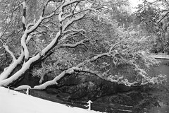 Pond Tree (Cymbidium Clarisse) Tags: park winter england blackandwhite bw lake snow cold reflection tree london digital canon pond branch branches powershot rye ixus freeze bm 雪 冬 chill southwark peckham wintry bestofmonth bestofthemonth bestofmonthaward