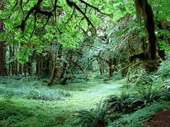 Clearing  in Olympic Rain Forest (Fractal Artist) Tags: vacation green wow washington ancient rainforest state lovely1 gorgeous glen fairy iam olympic magical timeless clearing primeval anawesomeshot firsttheearth