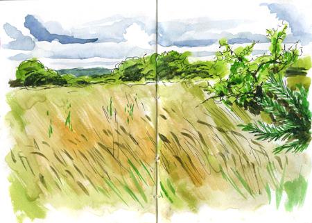 longgrass