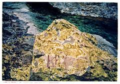 Lichen-covered rock. Orari Gorge, South Canterbury, NZ. (jasoux) Tags: trip newzealand nature water rock trekking trek river outdoors photography countryside moss xpro crossprocessed xprocess rocks hiking crossprocess 28mm canterbury boulder hike slidefilm zealand valley riverbed crossprocessing nz gorge lichen analogue geology wilderness fullframe xprocessed nondigital ricoh ramble xprocessing orari southcanterbury