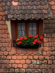 Rothenburg ob der Tauber, Germany (Alberello) Tags: flowers red flower germany rouge interestingness interesting finestra pasquale rosso germania balcone rothenburgobdertauber fiorito alberello mywinners colourartaward artlegacy spagnuolo pasqualespagnuolo goldstaraward alberellophotography