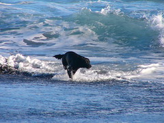 giochi acquatici (Aspirin Photo) Tags: sea dog chien mer france water reunion cane photo eau flickr mare ile acqua francia réunion aspirin isola aplusphoto aspirinphoto pisasocialevent