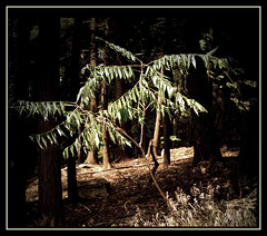 Yearning for something (Maureen F.) Tags: light sun tree forest searchthebest muskoka thegoldenmermaid