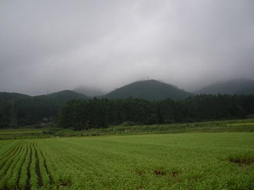 あたしはソバ喰いと言われる程、ソバが好き。養護施設では、ソバなんてカップ麺しか食べたことがないの。日本の伝統的な食べ物なのに…