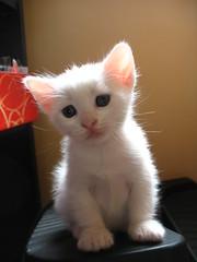 ney (Marchnwe) Tags: light red white eye cat paw eyes