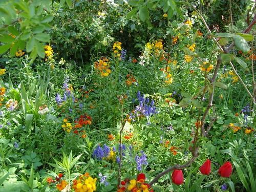 English garden, Oxford