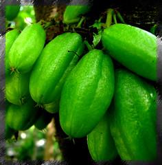 Iron Tamarind!!! (Nishanth Paul) Tags: green many vegetable bunch tamarind