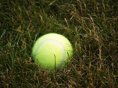 Tennis Ball in Grass