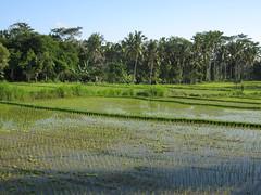 IMG_1407 (jxbfr) Tags: bali ricefields tanahlot balisunsets