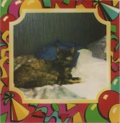 Picture71 (oeyelike) Tags: old polaroid photos runcorn