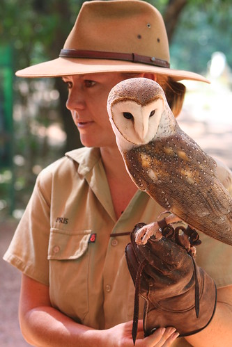 Barn Owl with guide, Territory Wild Life Park
