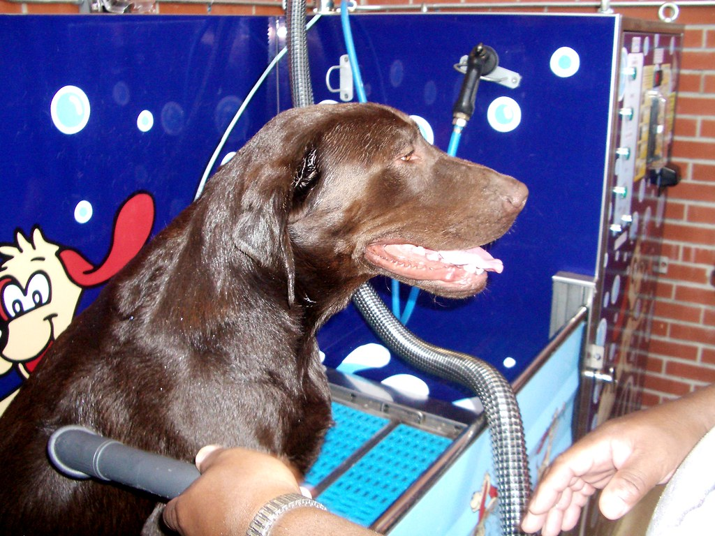 The worlds best photos of pet and yourself flickr hive mind fort benning dog wash grand opening tmcpetvending tags dog pet do fort it solutioingenieria Choice Image