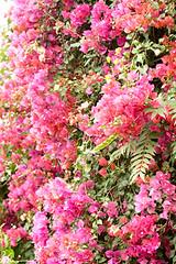 Flowertree to check (gipukan (rob gipman)) Tags: africa green nature free safari np uganda xsi kibale 450d canon100400lis img9848