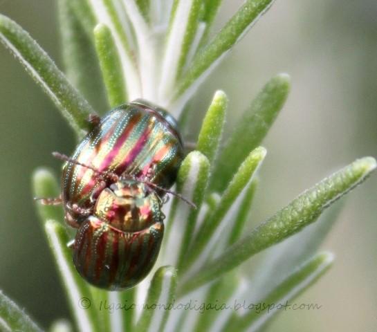 insetti bellissimi