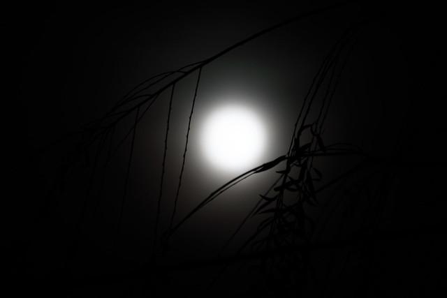 Pleine lune dans les Saules