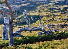 Fallen (rmrayner) Tags: tree sunshine 35mm canon spectacular eos scotland photo best canoneos bestset canoneos35mm bestimage aplusphoto topimage rmrayner ralphraynerphoto scanned35mmprint spectacularshots ralphrayner