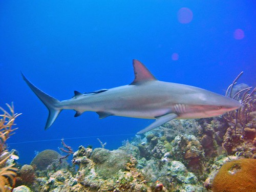 Fauna Marina en Nassau, Bahamas