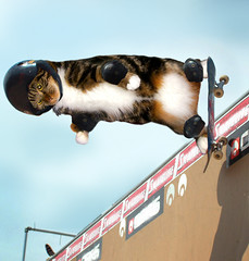 Safe Skater  ~(CatChallenge#11)~ (Gravityx9) Tags: cat photoshop moi chop skater ff kine funnycats 0707 dirtyword whathaveyoudone catchallenge 072207 psanimals