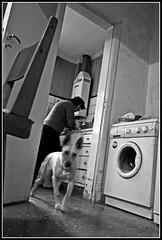 Aujourd'hui, c'est un jour comme tout les autre jours (zaqi) Tags: blackandwhite bw dog blancoynegro dish noiretblanc documentary bn wash biancoenero mora zaqi 123bw aplusphoto szaqii