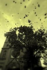 Castles & Dreams 28  House of Vampire 5 (Ewciak & Leto) Tags: birds dark sadness bravo sad darkness vampire gothic dream fantasy horror nightmare crows legend canoneos350d mystic thebigone supershot 250v10f abigfave anawesomeshot v401500 v101200 v76100 v501600 v601700 v201300 castlesdreams superbmasterpiece v301400 scaryhouses flickrelite coolestphotographers houseofvampire