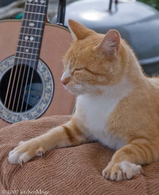 musical sphinx cat