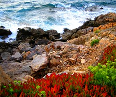 Flowers, Rocks and Stormy Sea (S.A.L.) Tags: flowers sea italy flower rock greek italia mare hellas creta greece grecia crete fiori heraklion tempesta scogli scogliera rethymno iraklio cretan chania ellas  kriti paralia avezzano    cane krhth  canea lacane cretese platinumheartaward  bellabruzzo     geropotamos