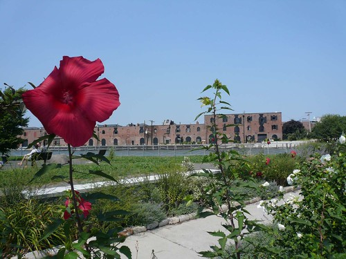 Red Hook Flower