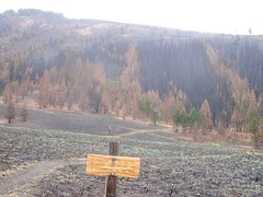 Trail with burn behind