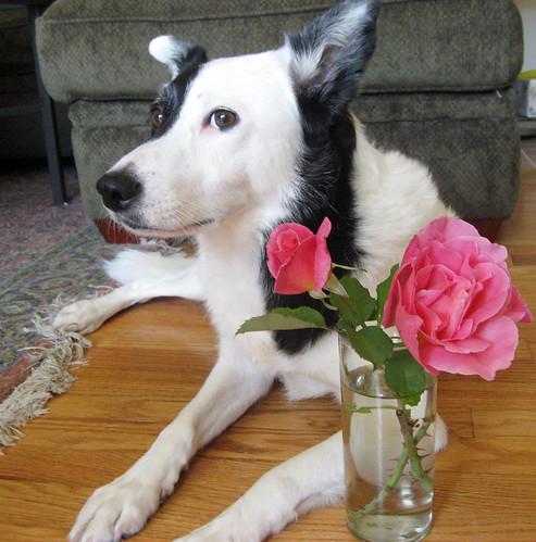 rose_panda02.jpg