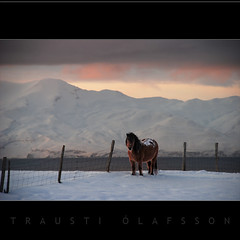 Waiting for the Sun (Trausti lafsson) Tags: horse snow nature iceland frost hdr hsavk thegoldengallery bej abigfave nikond80 imageplus multimegashot obq goldenheartaward goldenart sensationalphoto thedantecircle artistictreasurechest traustilafsson themonalisasmile imagesforthelittelprince worldsartgallery