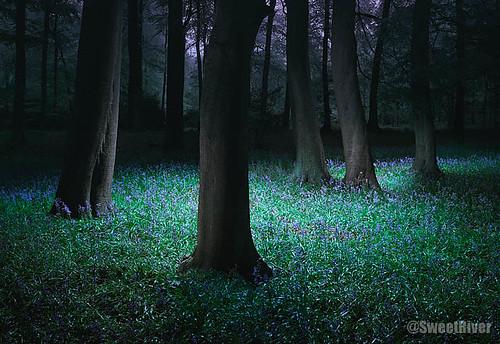 Grimsditch-Treeline-2005