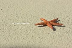 (Leit Rosewater) Tags: ocean blue red sea summer sun sunlight beach outside outdoors sand treasure starfish text flordia