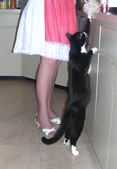 Me and black Italian, in kitchen, he's stealing the maids BIRD duster (Sugarbarre2) Tags: show city boy party people urban woman pet white feet cat mom paw eyes nikon funny toes hand head sandals tail flash silk mini skirt retro apron gato short wife heels granny