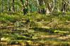 Deep Nikko in Autumn-5369_tonemapped (Gideon Davidson) Tags: autumn nikko hdr tochigi japanhdr