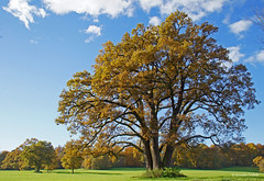 Outstanding tree (dorena-wm) Tags: autumn tree herbst bernried baum kloster outstanding bernriederpark mywinners abigfave mygearandmepremium mygearandmebronze mygearandmesilver dorenawm