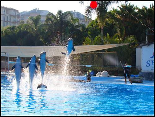 Espectáculo Delfines (2)