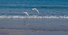 IL VOLO (zagor64.) Tags: del agua san mare uccelli acqua autunno animali marche sanbenedettodeltronto passeggiata tronto benedetto anawesomeshot