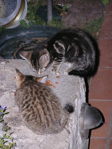 6-19-07 Porch Babies 03