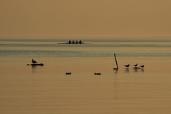 Leman Tribes (1) (Fispace) Tags: blue sunset shadow lake water birds yellow gold switzerland boat silhouettes ducks lausanne rowing leman rowers saintsulpice genevalunch