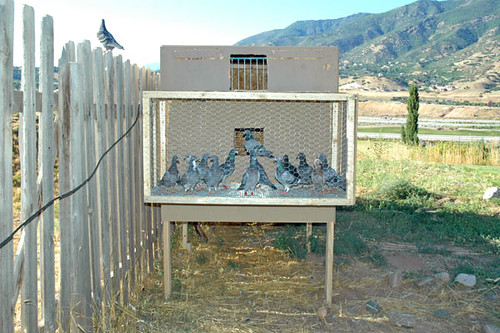 Pigeon Loft Construction Plans http://12voltman.wordpress.com/2007/08/01/my-pigeon-loft/