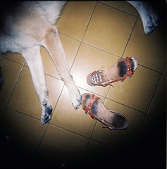 Rest (elbud) Tags: dog film feet fur telaviv holga xpro crossing cross floor kodak sandals tel aviv iso bitch processing rest asa date process expired vignetting ta ektachrome processed e6 vignette sandal tlv crossed ept dated 160 c41 shlomi cfn 160t overdate overdated
