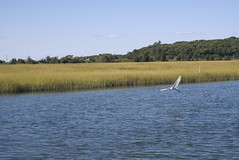 Long Island Wetlands Tour