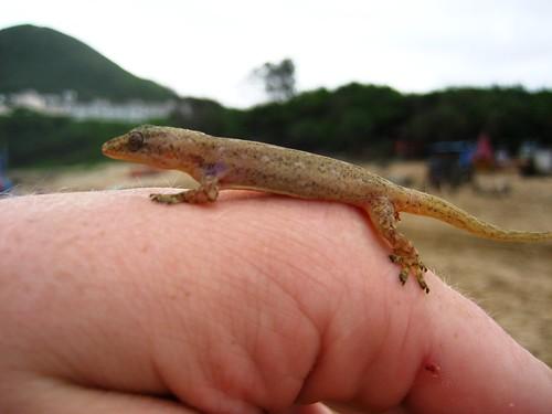 John and his Gecko