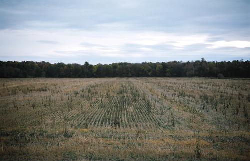 gloomy field.