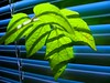 electroplant (*ivyness*) Tags: blue shadow plant color green leaves leaf bright photoshopped jalousie ps pop shade blinds splash farbe bunt rollo knallig