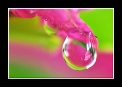 Refreshing (AHMED...) Tags: pink pakistan macro water colors lens drop bougainvillea droplet reverse ahmed sind catchy sindh muhammad reverselens relections mehrabpur 25faves bogenvelia abigfave aplusphoto diamondclassphotographer flickrdiamond searchandreward colourartaward